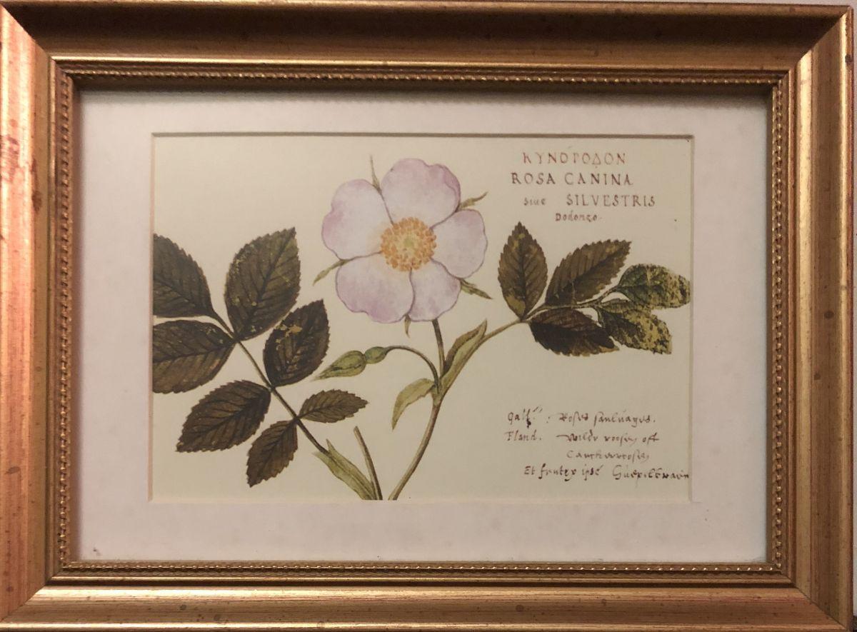 Obrázek na zeď v dřevěném zlatém rámu Růžový květ